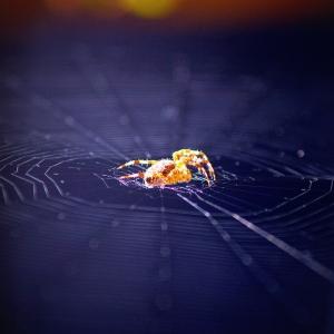 1-spider